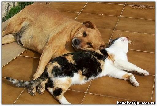 Тело кошки