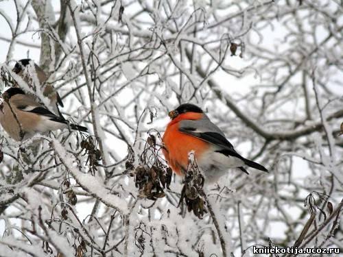 Скачать песню после зимы