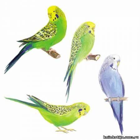 рисунок с попугаем